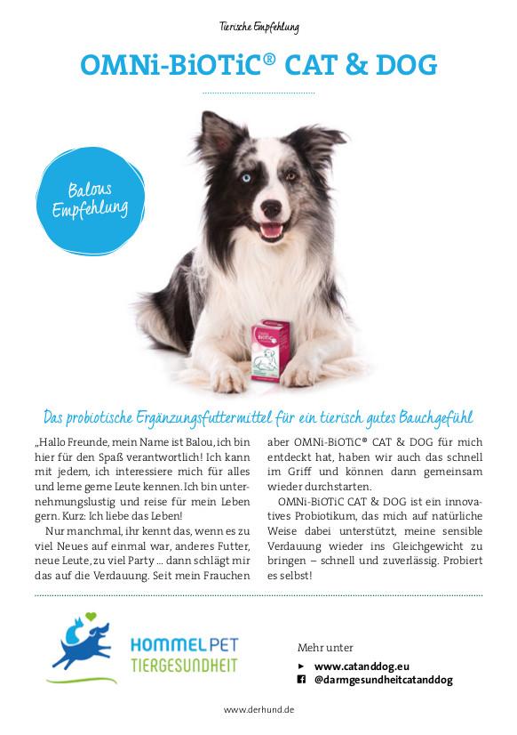 Der Hund | Tierische Empfehlungen